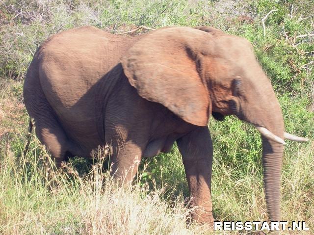 Krugerpark