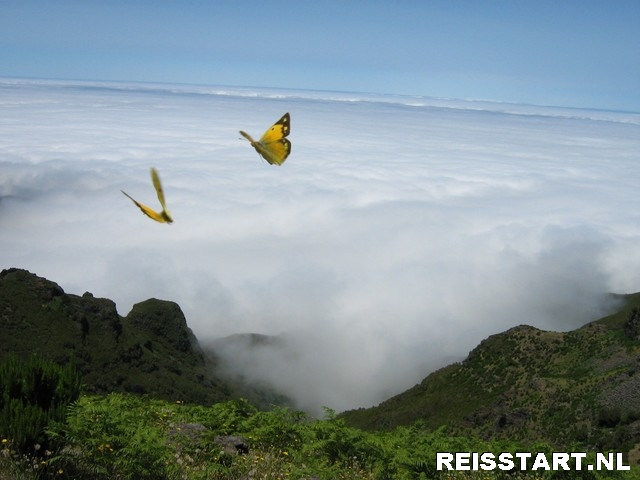 vlinders bij pico ruivo