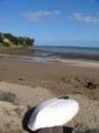 Big Manly beach