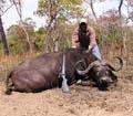 Buffel