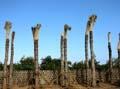 Palm bomen