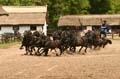 10 Paarden