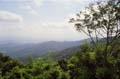Groen uitzicht