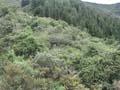 Cerro de Usaquén