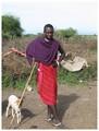 masai en vee