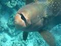 Snorkelen bij Hurghada