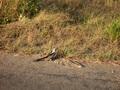 In  het Krugerpark
