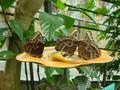 Vlinders in het Mariposario del Drago