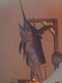 Zwaardvis op het menu
