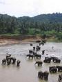 Olifanten die richting jungle lopen