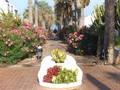 Boulevard Playa Americas