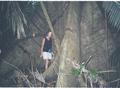 Een boom in het regenwoud