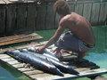 Een visser aan het werk.