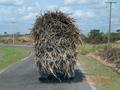 Vervoer van suikerriet
