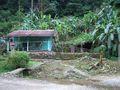 Huis in de jungle