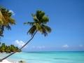 Palmboom Op Saona Island
