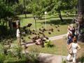 Gieren bij Senegambiahotel